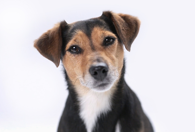 EMZ Hanauer - Smart Solutions Imagefilm Filmhund